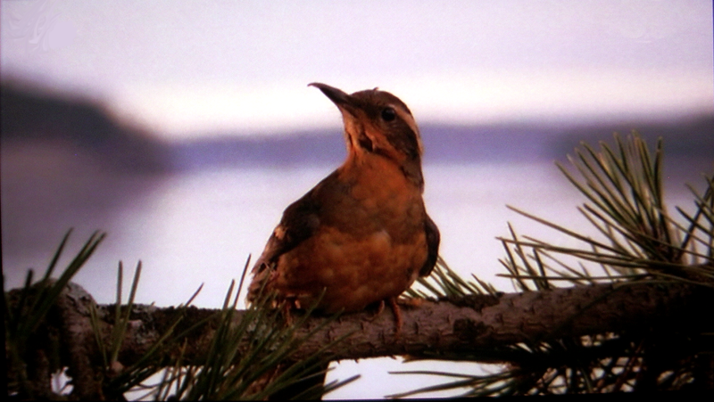 The_twin_peaks_bird_by_pinkythepink-d1yd785